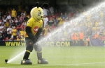 Team Review - Watford
